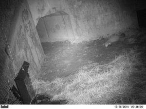 monitoring zwierząt